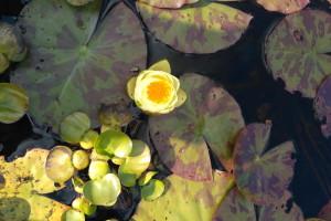 отзывы о Waterlilia.ru